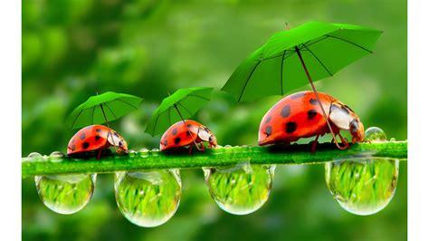 best free 2016 ladybug 4k wallpaper free 4k wallpaper