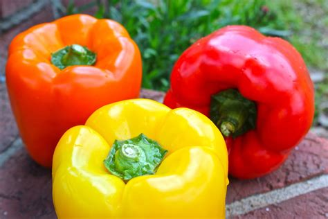 Colored Peppers | katherine tri colored bell pepper salad