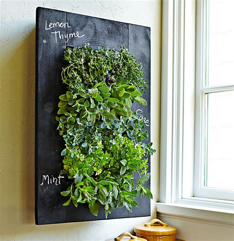 herb wall inspire a kitchen garden dwell with dignity