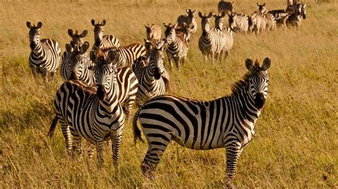 In Kenya best safari holidays in september world safaris