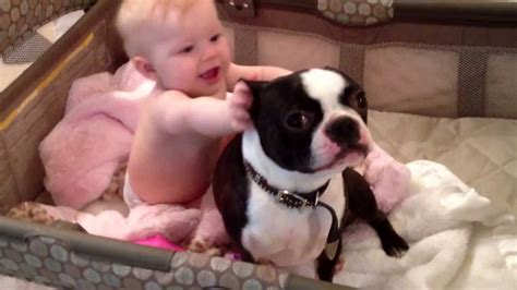 best food for boston terrier puppy best friends in the crib baby and boston terrier