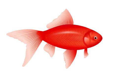 clipart no background fish clipart no background 101 clip art
