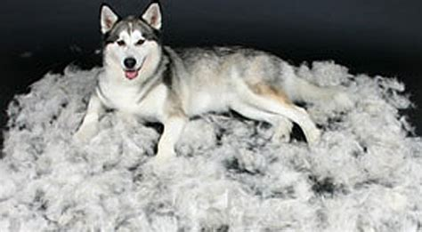 Shedding Treatment by Wag N Wash Wag And Wash Self Service Wash Service