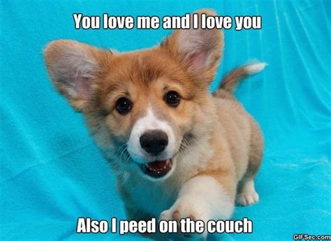 Cute Puppy Meme - funny pictures blog best funny pictures memes and gif
