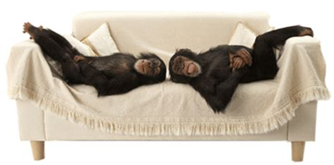 monkeys on the bed sugar spice and monkey tales meet me on monday