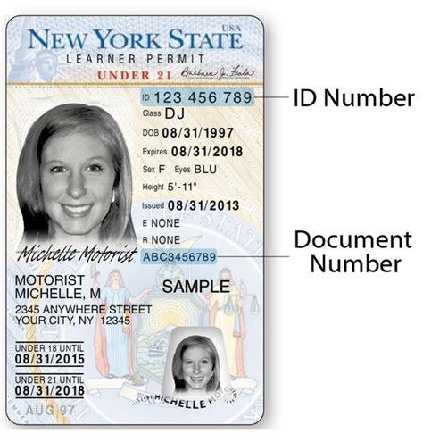 Search For By Drivers License Number What S The Best Way To Get My Driver S License Number And Information If I Lost My