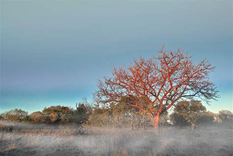 TrekNature   winter in South Africa Photo