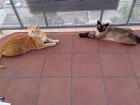 katzen in der wohnung halten katzen in der wohnung tiergerecht halten