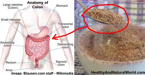 Best Way To Detox The Bowels by How To Effectively Cleanse Your Colon With Only 2 Ingredients