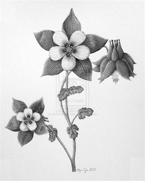 columbine flower tattoo columbine flower by scheheraz deviantart on