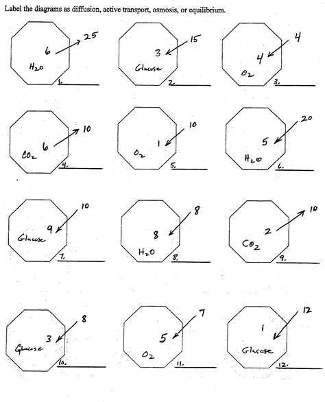 Cell Processes Worksheet by Cell Processes Worksheet Worksheets Releaseboard Free