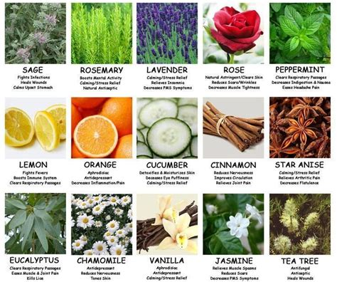 spices and their benefits books health benefits of herbs spices back to nature