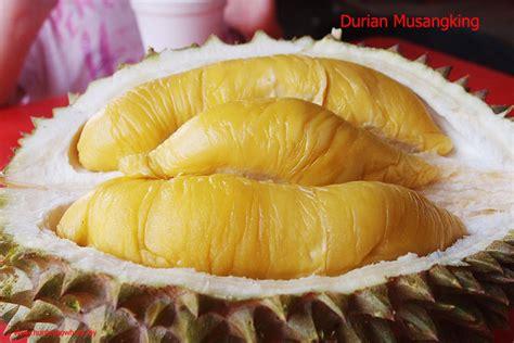 Bibit Durian Musang King Sumatra Barat 8 durian unggul negeri jiran bebeja