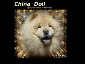 china doll chows chinadollchows china doll chows tx chow breeder