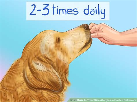 allergies in golden retrievers 6 ways to treat skin allergies in golden retrievers wikihow