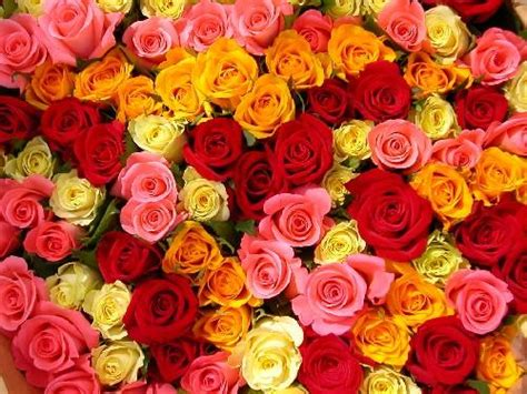 different colors of roses s day roses what color should you choose by