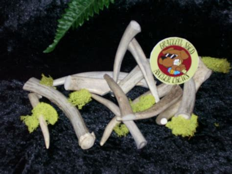Grateful Shed Antler Chews by Deer Antler Chews