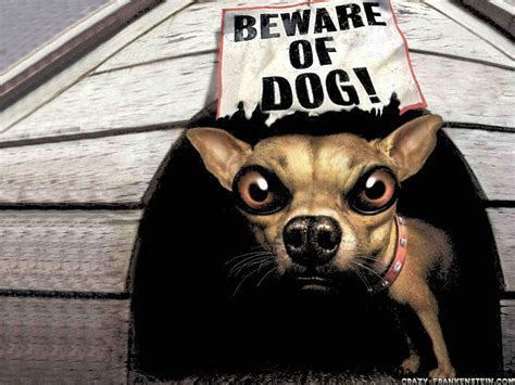 all wallpapers funny dogs wallpapers funny wallpapers desktop wallpapers