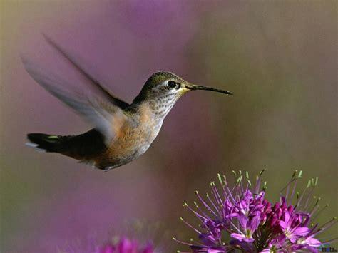 bird wallpaper for walls hummingbird wallpaper and background 1280x960 id 123679