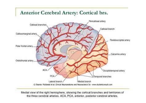 brain blood supply diagram blank anatomy diagrams blank process diagrams elsavadorla