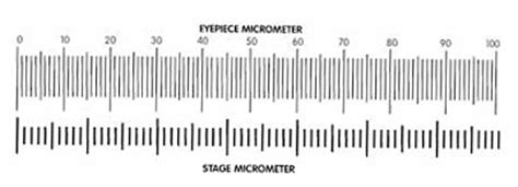 printable ruler micrometer measuring with a microscope