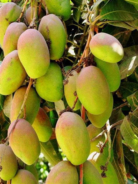 fruit punch tree 17 best images about fruit tree on royalty