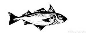 haddock conseils pour choisir et cuisiner le filet