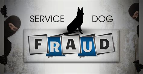 how to get involved with service dogs service certification scams k9 partners for patriots
