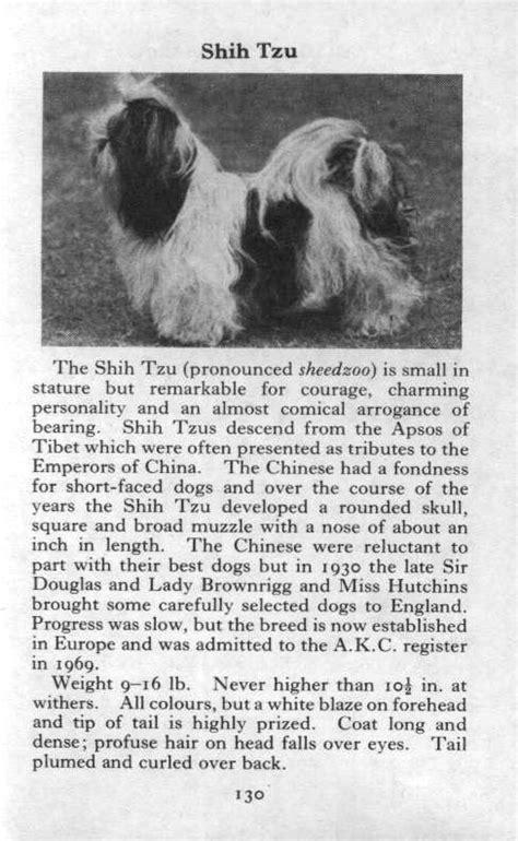 shih tzu description shih tzu 1970 vintage print matted ebay
