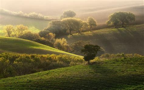 nature landscape sunrise grass trees mist field