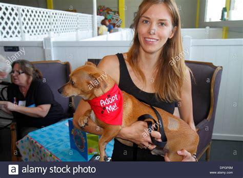 puppy adoption miami miami florida wynwood district pet adoption event volunteer stock photo