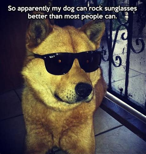 Dog With Glasses Meme - funny animal pictures of the day 35 pics