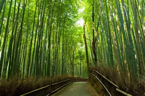 Wisteria Flower Tunnel by Sagano Arashiyama Walking Tour Kyoto