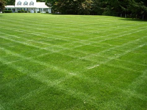 dutch touch blog stay informed selecting grass for your landscape