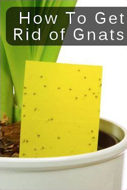 how to get rid of gnats in backyard 1000 images about beautiful blooms on pinterest