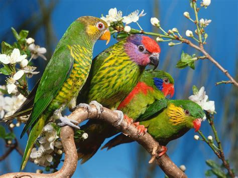 Parrot L by Image Collection Images For Colourful Birds Wallpaper