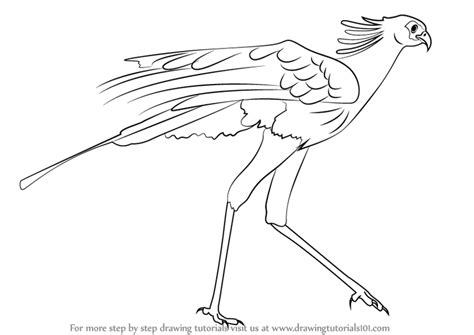 how to a bird learn how to draw a bird bird of prey step by step drawing tutorials