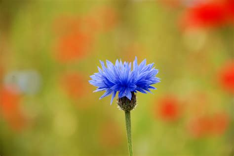 kembang warna warni by astayoga on deviantart