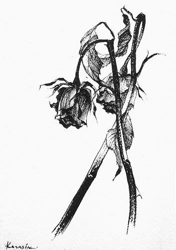 wilting rose tattoo wilting black and white search images for