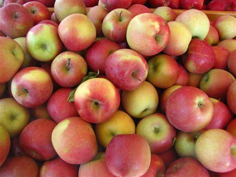 apple fuji indo apple new england apples
