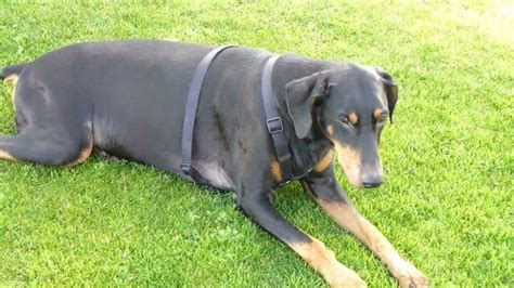 neurological problems in dogs neurological disorders in dogs understanding the ordeal