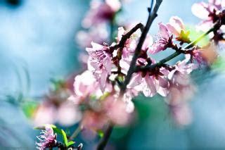 imagenes de rosas vivas flores rosas vivas baixar fotos gratuitas