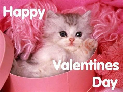 happy valentines day cat happy s day pictures photos and images