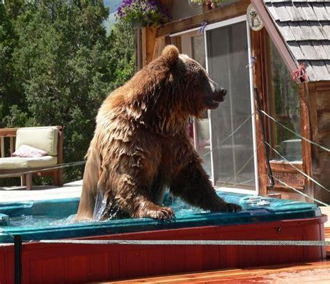 bear in a bathtub bear in a hot tub animals pinterest