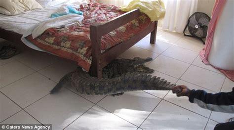 alligator bedding man 40 finds 8ft crocodile hidden under his bed after it