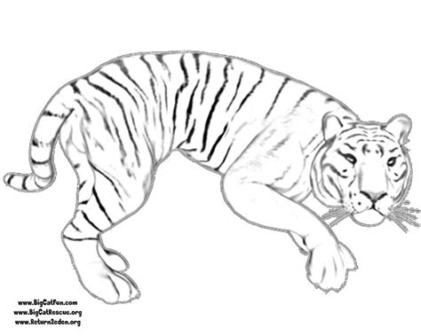 Baby Tiger Outline by Tiger Outline Az Coloring Pages