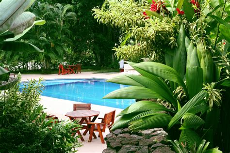 poolside plants pool landscaping ideas from your dallas pool builder custom