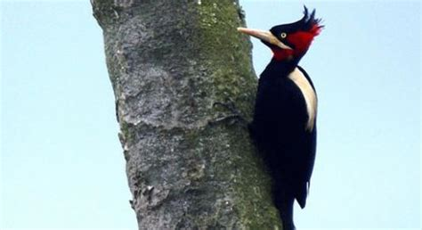 woodpeckers basic facts about woodpeckers defenders of