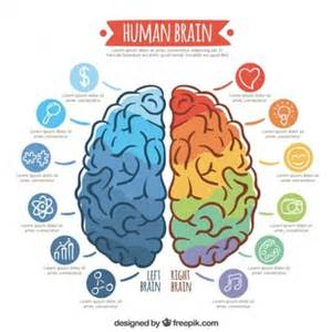 Brain Template by Brain Vectors Photos And Psd Files Free