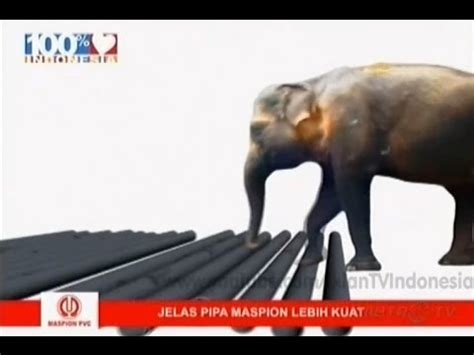 Pipa Maspion D iklan pipa maspion edisi pipa diinjak gajah